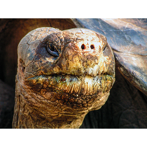 Lonesome George | Galapagos Islands